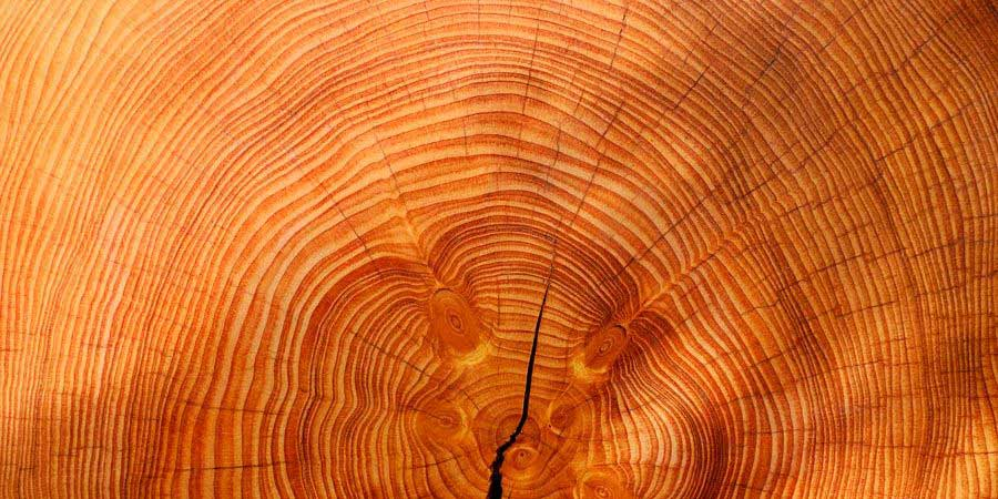 decoracion-madera-900x450